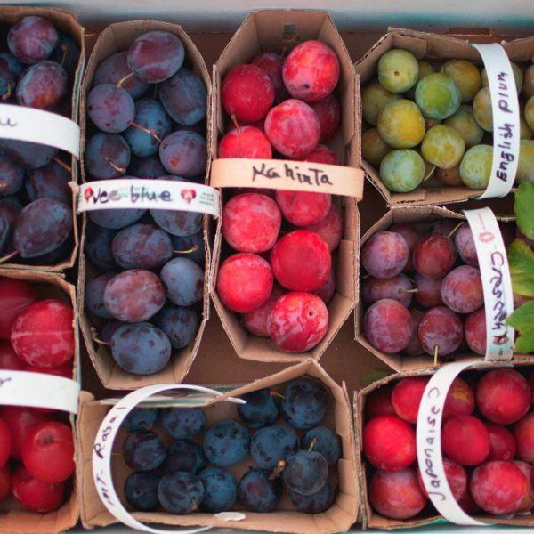 fruits-producteurs-locaux-cote-est